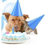 Dog-cat-birthday