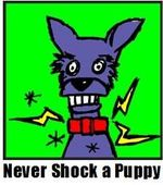 Never-shock-a-puppy-badge