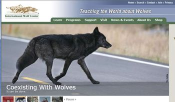 International-Wolf-Center